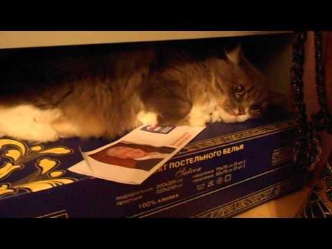 Кот единоросс