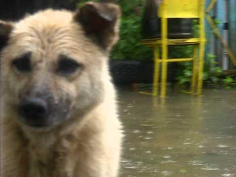 Приморье тонет: 600 человек в зоне подтопления