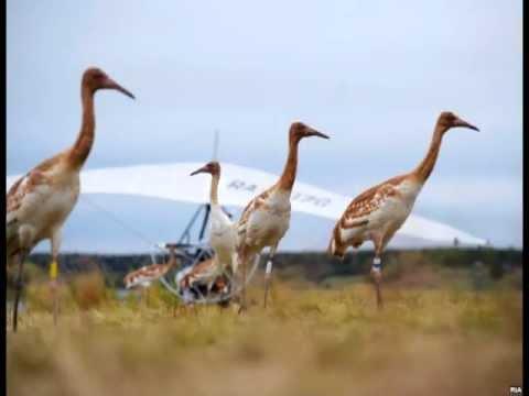 Ответ Альфа-стерху: Полет мечты для курицы Фионы, гуся Гошы и индюка Иннокентия