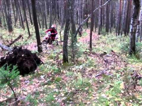 В Британии спасают собак / В России не дают спать медведям