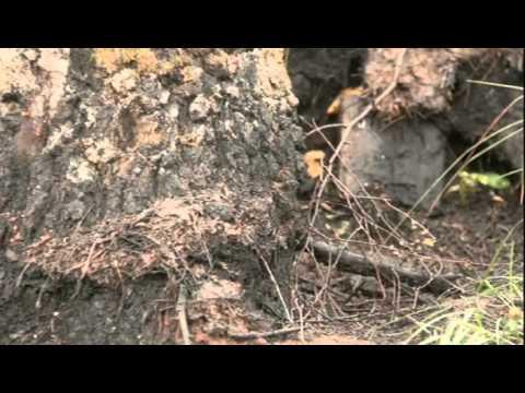 Конец света 21 декабря 2012: Документальные фильмы