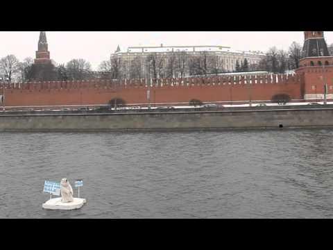 Гринпис — Арктика не сдается!: Белый медведь доплывший до Кремля арестован