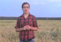 Курский фермер пообещала сжечь урожай: Обращение к Царьку Лубянскому