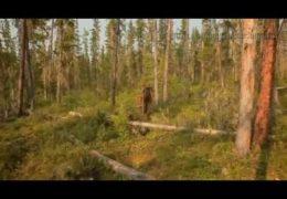 Путешествие в дебри Сибири — путинская Россия 21 век