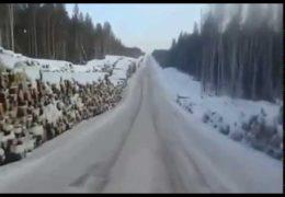 Леса Сибири и Дальнего Востока вырубают под ноль и вывозят в Китай